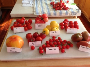 A sampling of both heirloom and new tomatoes from my garden