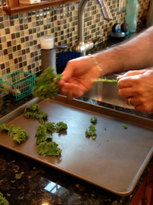 Removing the kale leaves from the stems