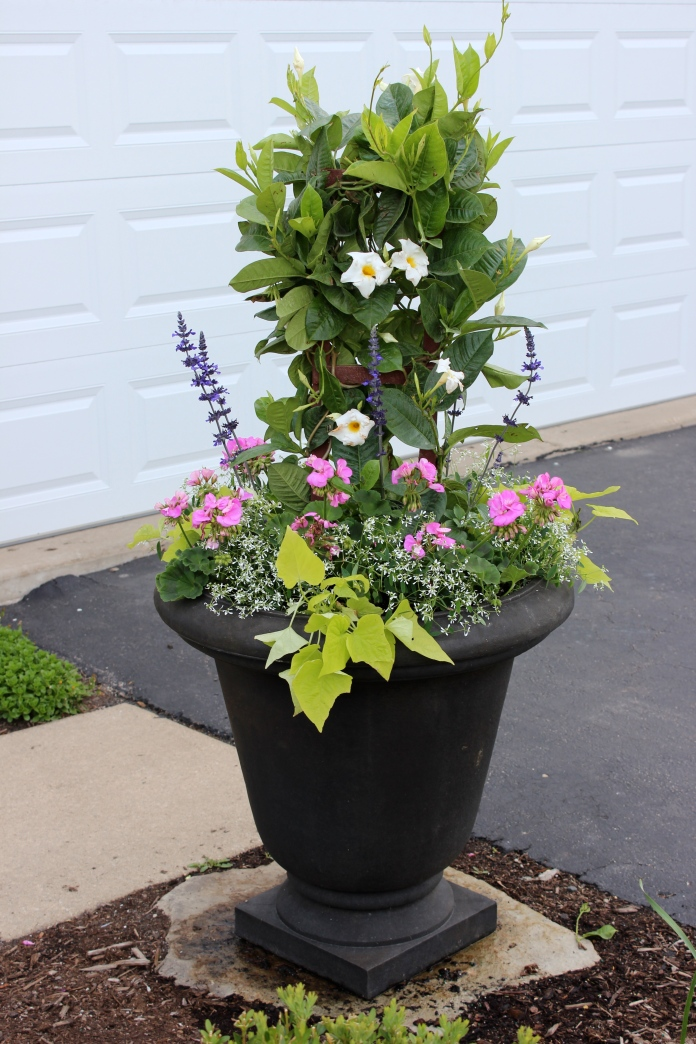 My front yard summer container    www.morewinelesswhines.com
